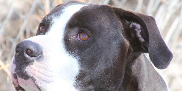 Demand Justice for therapy dog murdered by Colorado police; Make Officer Price Accountable!!