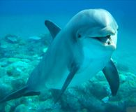 Tanzania- Stop Dynamiting Dolphins and using them as Shark Bait