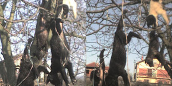 Demand justice for hanging of stray dogs in Serbia