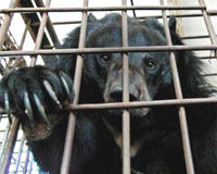 South Korean Bears Need Your Help Today!