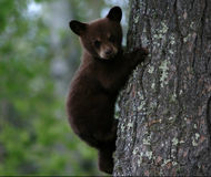 Keep Protections for Florida Black Bears