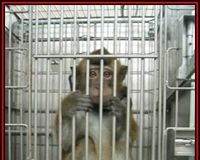 Urgent Action: China Southern Airlines to restart transporting monkeys!‏