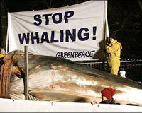 Tell Obama to Stop the Whale Slaughter Now