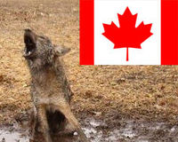 Ask Canadian Retailer #SportingLife to stop selling cruel FUR PRODUCTS