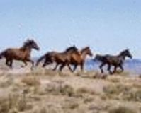 SAVE OUR NATION'S WILD HORSES & BURROS FROM EUTHANASIA AND SLAUGHTER!!