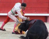 ACTION ALERT: Say NO to Bullfighting in Ecuador