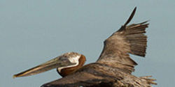 Urge Senate to Act on Gulf Oil Spill