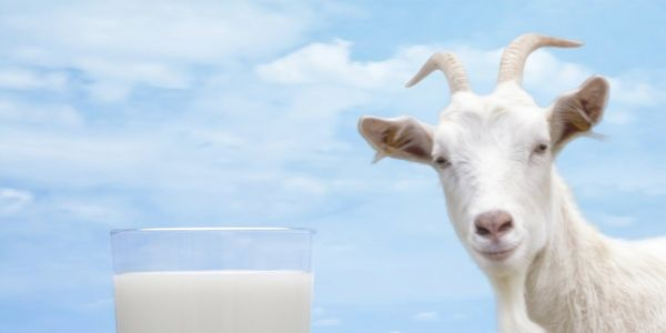 Legalize Raw Milk Sales in UK Shops!