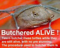 Tesco- Stop Selling Live Turtles