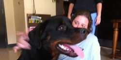 Save The 33 Rottweilers from Being Put to Sleep by a Saint Clair County Judge ,Alabama