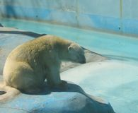 Save Yupi the Polar Bear