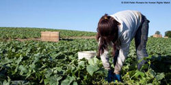 Protect Child Farm Workers