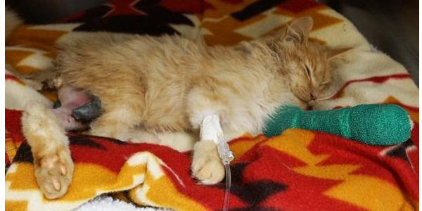 Urge Punishment for Teen That Kills Kittens out of Boredom and Post on Face book