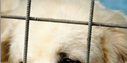 Stand Against Brutal Chinese Dog Trade!