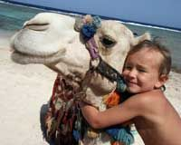 Stop the Senseless Slaughter of Australian Camels