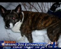 Justice for Basie! Stop Euthanizing Animals in Fairfax County