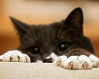 Tell U.S.- BAN Cat Declawing