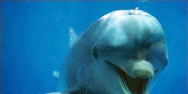 Shut Down Illegal Dolphin Swim Facility in The Bahamas