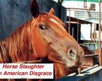 CALL FOR FEDERAL BAN AGAINST HORSE SLAUGHTER