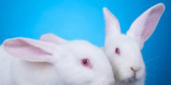 End the Sale of Animal-Tested Cosmetics in the EU