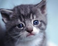 Tell Washington University to Stop Hurting Cats