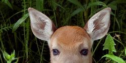 SUPPORT Indiana couple fighting charges over rescuing injured baby deer.