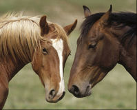 Tell NYC Museum to STOP Serving Illegal Horsemeat!