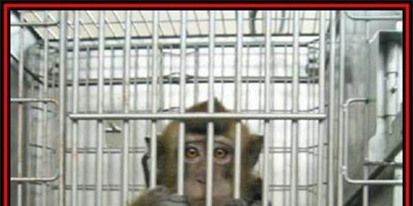 Air France, requesting the cessation of transport of animals to vivisection laboratories~BEGINNING 2