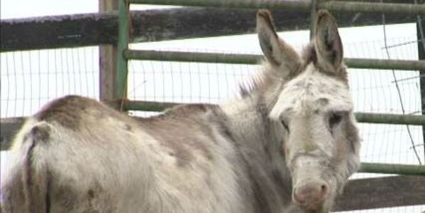 Punish Owners of Hampshire Area Farm; Animals found dead, emaciated and in Poor Health!