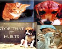 Don't hurt me! Stop cruel animal research! This is the voice of animals that are hurting!