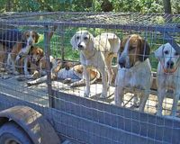 S. Carolina- Include Hunting Dogs in Animal Welfare Law