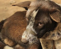 Stop The Brutal Slaughter Of Dogs In Bali