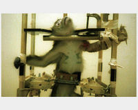 Tell NASA to Stop Using Primates for Space Research