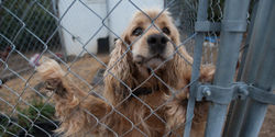 Tell the USDA to Stop Puppy Mill Imports