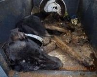Justice For Jack--PLEASE SIGN AND SHARE--