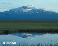 Urge Secretary Jewell to Protect Izembek National Wildlife Refuge