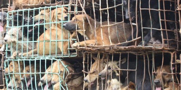 petition: URGENT: Kijiji Canada, you must stop puppy mills