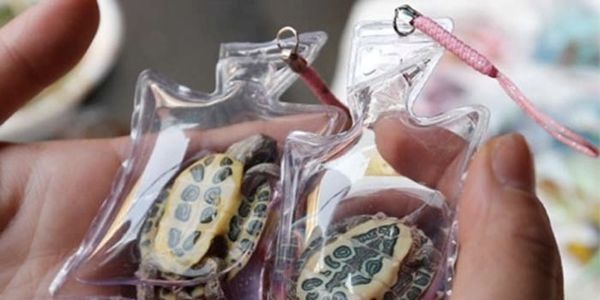 Put a Stop to Live Animals in Keychains and Mobile Phone Trinkets in China! 57b36998ac
