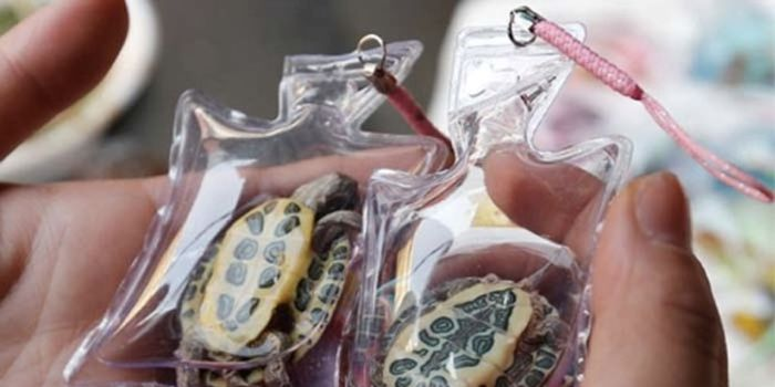 petition  Put a Stop to Live Animals in Keychains and Mobile Phone Trinkets  in China! 9a1efe8434