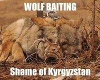 WOLF BAITING - SHAME OF KYRGYZSTAN