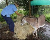 Marion County Animal Center: Let Doodle a Young Sexually Abused Donkey Go to Sanctuary