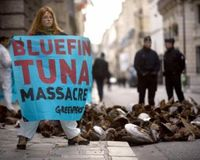 Create Marine Sanctuary for Bluefin Tuna