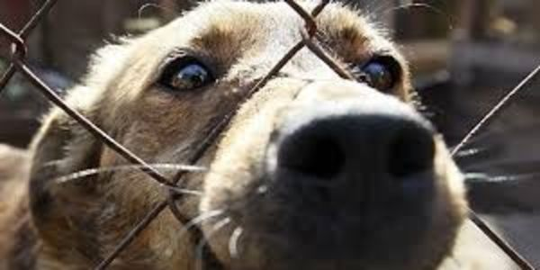 2000 dogs and cats'll be killed for the Olympic Games (Sochi 2014)! Please help to stop this.
