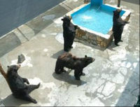 Revoke Bear Park's License to Exhibit Bears