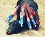 Stop Bullfighting Festivals in France!