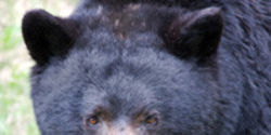 China: Don't Support Bear Bile Farms!