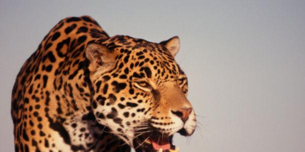 Arizona: Don't Weaken the Endangered Species Act!