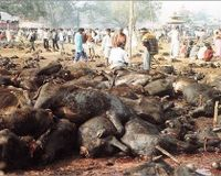Urge Nepal to Stop Animal Cruelty