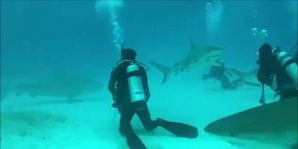 Continue the prohibition of shark feeding in state waters Fla. Admin. Reg. 68B-5.005.