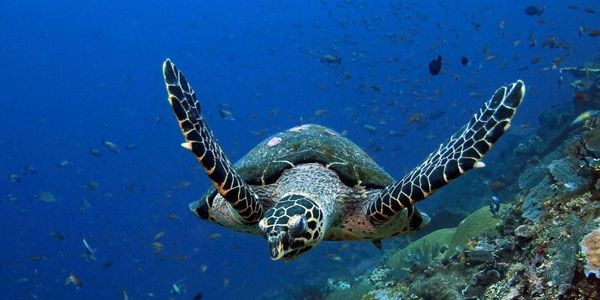 Stop killing Turtles over 42,000 Were Killed Legally Last Year